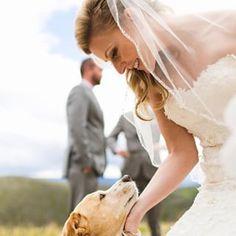 """""""Parabéns, mamãe! Eu estou tão feliz por você! Obrigado por me deixar fazer parte de seu dia especial.""""   21 cães adoráveis que deixaram cerimônias de casamento mais completas"""