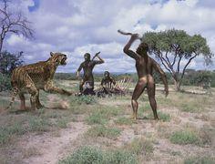Australopithecus africanus. 2.6 million years ago (Act 5).