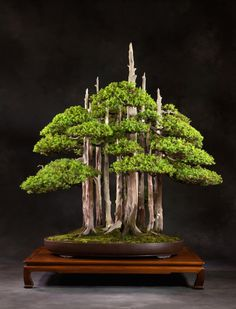 Iconic Bonsai tree, Goshin by John Naka.