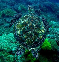 The shell of this turtle looks just like the bottom of the sea. - All Rights Reserved