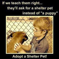 If we teach them right, they'll ask for for a shelter pet instead of a puppy. <3