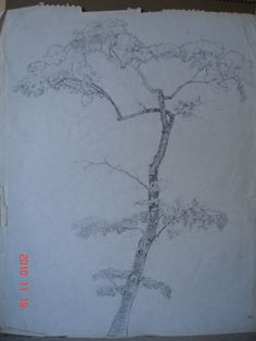 This tree was drawn by my mom, Betty - she's an excellent artist :-)