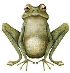 frog | iban barrenetxea