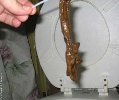 ahh ... to cleanse the colon - tribe.net Parasite Cleanse, Worms, Bacon, Treats, Diet, Breakfast, Health, Food, Sweet Like Candy
