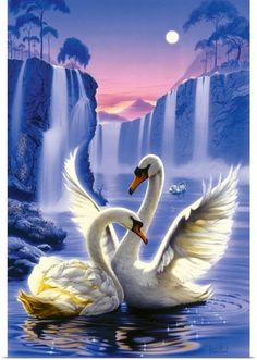 Steve Read Solid-Faced Canvas Print Wall Art Print entitled Swan Dreams, None Beautiful Nature Pictures, Beautiful Nature Wallpaper, Beautiful Birds, Most Beautiful Paintings, Beautiful Swan, Peacock Wall Art, Peacock Painting, Swan Pictures, Molduras Vintage