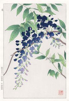 Rose by Yuichi Osuga from Shodo Kawarazaki Spring Flower Japanese ...