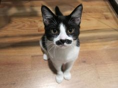 Lately Ive been seeing cats with fancy mustaches on here. But what about the working class cats with lopsided Randy Marsh mustaches?
