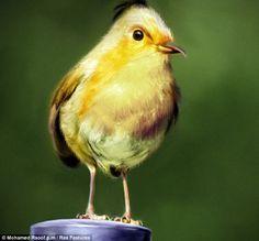 Angry Birds: The yellow bird <3
