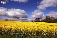Fotos Landschaft SH - FoReAl .de Bilder - Themen Schleswig ...