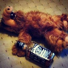 I had an Alf doll in my dorm in college. my friends were merciless. After one particularly long day of finals, I came home and Alf had hung himself. I miss college, and Alf! Funny Meme Pictures, Funny Memes, Hilarious, Jokes, Videos Funny, Bachelorette Bucket Lists, Cowboys From Hell, Crazy Women, Jack Daniels