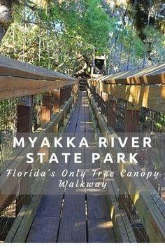 Visiting Myakka River State Park in Sarasota, FL. Swinging tree top bridge #Floridasummerstateparks