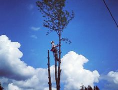 Tree Removal in Mount Vernon
