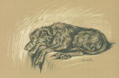 Irish Wolfhound, antique print