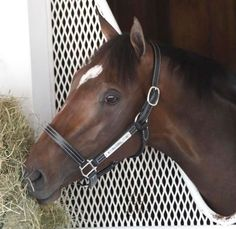 Courageous International Star Looking Good for Kentucky Derby 141. International Star hasn't run against graded stakes horses, but many of the top...
