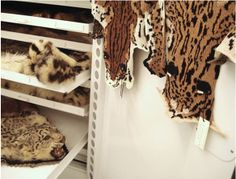 Ruth Marshall knits endangered big cats skins. She uses a university collection to design them. They are rad.