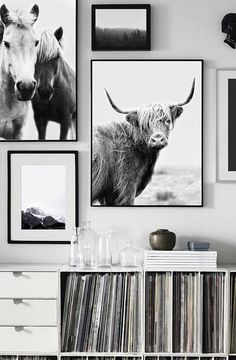 Why Hon File Cabinets Are The Only Option For Your Property Or Office Highland Cow Art Print, Printable Art, Cow Wall Art, Highland Cow Poster Black And White Posters, Black And White Wall Art, White Walls, Black Art, Black White, Highland Cow Art, Highland Cattle, Cow Wall Art, Horse Wall Art