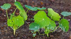 Magic Herbs, Private Garden, Kraut, Herbalism, Plant Leaves, Backyard, Gardening, Vegetables, Health