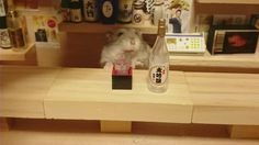 Tiny Hamster Bartenders Ready to Listen to Your Troubles (15 pictures)