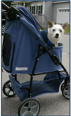 Handicapped Pets - Walkin' Pet Stroller
