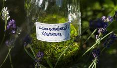 Jak vyrobit a využít levandulovou tinkturu Wine, Drinks, Bottle, Liquor, Beverages, Flask, Drink, Beverage, Jars