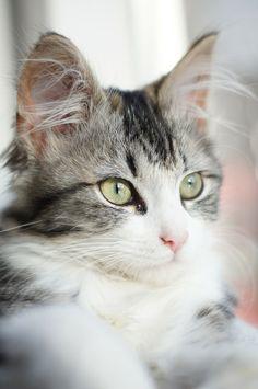Pietje Cat