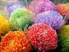 Colorful Flowers by Don and Elaine, via Flickr