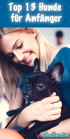 Dog breeds for beginners: These are the 13 best beginner dogs - Hunde - Katzen Dog Houses, Dog Breeds, French Bulldog, Fun Facts, Life Hacks, Dog Cat, Funny Pictures, Kitty, Horses