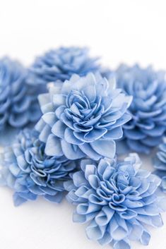 10 Royal Blue Wood Flowers, Cream Wedding Flowers - Company Forty Two Blue Flowers, Beautiful Flowers, Blue Dahlia, Wood Flowers, Cream Wedding, Blue Wood, Blue Aesthetic, Container Gardening, Flower Power
