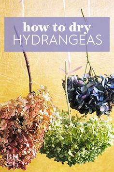 Follow along with Gloria's process for a no-fail way to dry hydrangeas. #howtodryflowers #hydrangeas #bestway #bhg