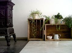 New place for little plants_1