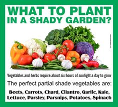 vegetable garden companion planting list garden seeds has a native american three sisters garden packet pinterest garden seeds planting and