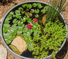 A stock tank pond is easy to create and adds excitement to a home garden