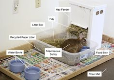 Bunny area with litter box, food dishes, and hay feeder