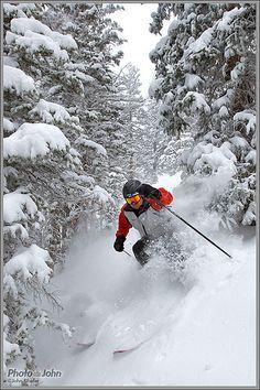 in the Black Forest trees, Solitude Ski Resort, Salt Lake City, Utah