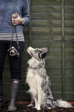 Love the shrunken sweater look with the striped t-shirt sticking out the bottom. And then there's that beautiful blue-merle looking border collie! I'd rather have the dog...