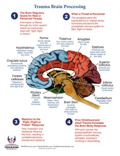 I chose this because of the in-depth way it presents the information on how the brain processes before, during, and after trauma. This is a great tool to pass onto clients or discuss with them. Neuroscience and Trauma Theory Brain Facts, Facts About The Brain, Trauma Therapy, Brain Science, Life Science, Mental And Emotional Health, Stress Disorders, Anatomy And Physiology, Educational Psychology