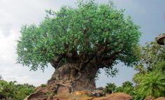 galerie photos arbre de la vie Disney's animal kingdom