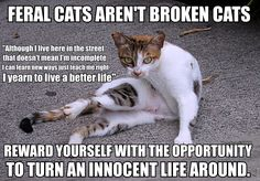 The feral Life http://sulia.com/my_thoughts/9247c1c8-af67-4d1d-a5e4-880b0037f6c7/?source=pin&action=share&btn=small&form_factor=desktop&pinner=119686333