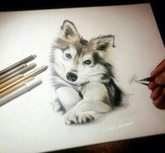 Husky dog colored pencil art