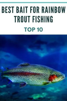 Rainbow Trout are predators. They will eat just about anything they can catch. As fry (young fish), they typically feed on small water insects, fish eggs and small crustaceans. Knowing their eating habits is crucial to help us pick the top 10 best bait for Rainbow Trout fishing. Trout Fishing Tips, Rainbow Trout, Best Fishing, Eating Habits, Bait, Insects, Hunting, Eggs, Water