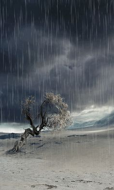 Download Animated 480x800 «Lonely tree» Cell Phone Wallpaper. Category: Nature