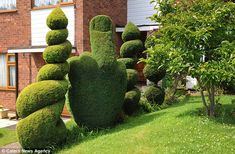 'Public order offence': The council has ordered that this bush carved into the shape of an offensive hand gesture in Richard Jackson's garden be altered after a complaint from a neighbour