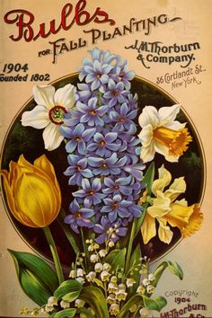 Bulbs for fall planting:1901-1904, 1906-1910, 1912 - J.M. Thorburn & Co.'s annual descriptive catalogue of flower seeds : - Biodiversity Heritage Library. http://biodiversitylibrary.org/page/45199274. #BHLinbloom
