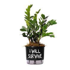 Vaso Autoirrigável I Will Survive Preto - Decohouse - Arte e Design para decorar