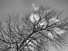 Ash and Light -Tree Series by Robyn King #art #fine art