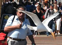 Birds Stealing Ice-Cream (birds, ice-cream) - ODDEE