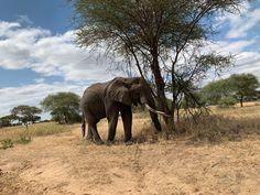 Bolivia, Nepal, Equador, Elephant, Animals, Kayaking, Animales, Animaux, Elephants