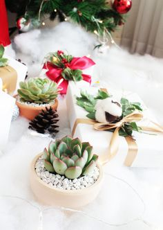 Christmas Succulent Gift.52 Best Succulent Gift Box Images In 2019 Succulent Gifts