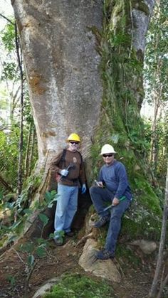 The Big Island Invasive Species Committee recently kicked off Hawaii Invasive Species Week with an albizia control effort in Lava Tree State Park. Our employees and other volunteers treated over 2,860 Albizia trees. Our companies continue to explore ways to proactively manage vegetation, prepare for storms, and reduce the possible impact of trees and other vegetation on our power lines. #aina #albizia #volunteering