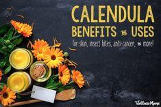 Calendula Benefits & Uses for Skin, Insect Bites, Anti-Cancer & More - Osrichelor Calendula Tea, Calendula Benefits, Herbal Hair Colour, Hair Color, Herbal Plants, Medicinal Plants, Wellness Mama, Stomach Ulcers, Homeopathic Medicine